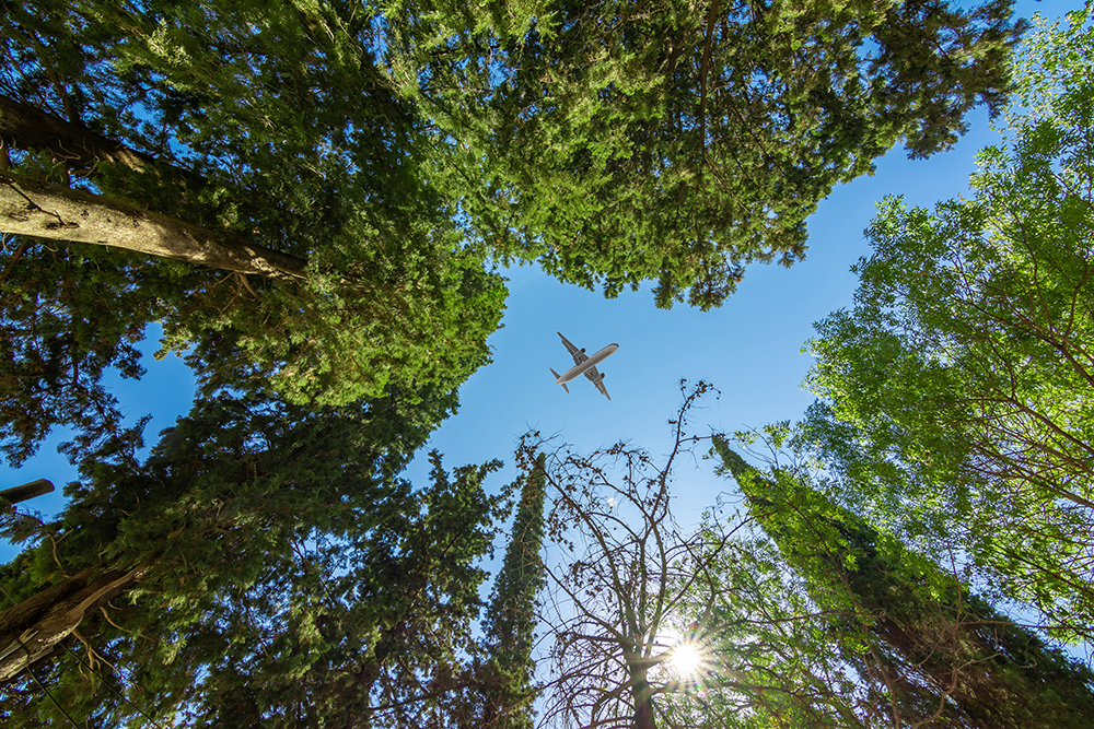 plane-over-trees