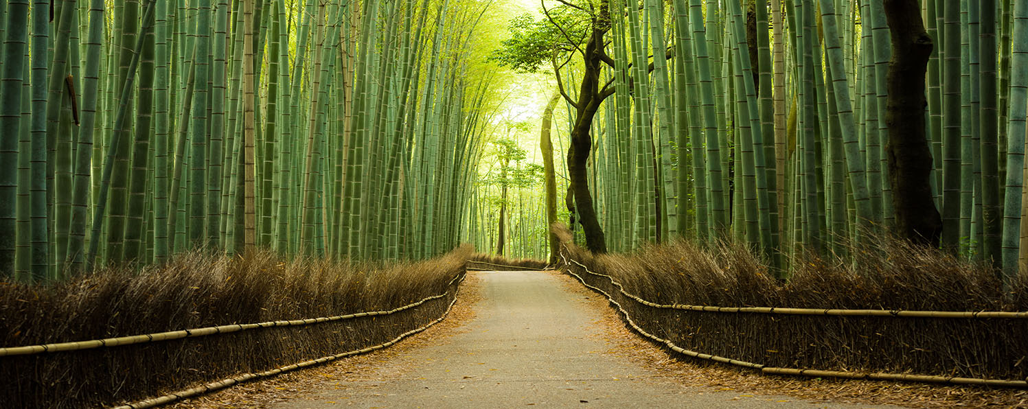 iStock-538811116 -bamboo forest2